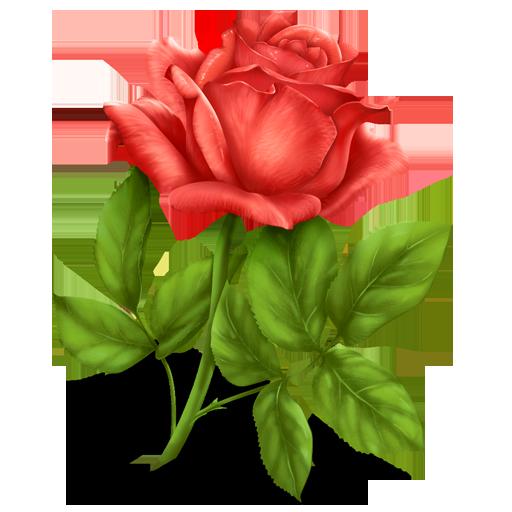 Flower Plant Png Rose Plant Flower