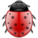 Ladybird animal insect bug