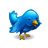 Bird animal twitter blue