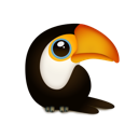 Toucan bird animal