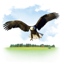 Bird america bald eagle fligth eagle animals