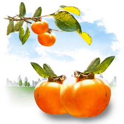 Food orange summer persimmon fruits