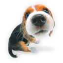 Puppy dog puppies hound beagle save animal pet