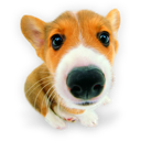 Puppy puppies hound dog corgi pet animal
