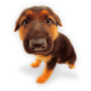 Puppy puppies hound dog german shepherd shepherd pet animal