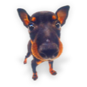 Puppy dog hound puppies terrier manchester terrier animal pet
