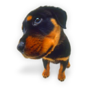 Dog rottweiler puppies hound animal puppy pet