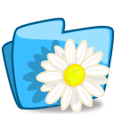 Folder flower camomile