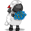 Aww sheep