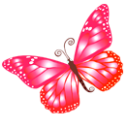 Butterfly pink animal lotus blossom