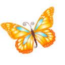 Animal butterfly orange