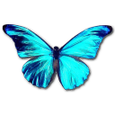 Rhetenor morpho butterfly