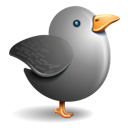 Grey bird twitter gray bird