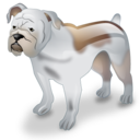 Bulldog dog pet