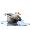 Hat rat pool chapeau mouse souris water animal eau