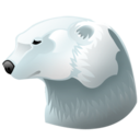 Polar animal bear